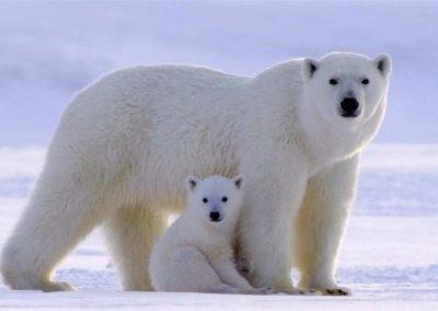 Bear & Cub - Bamsebu