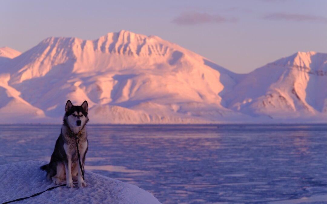 Ettra in the blue polar light